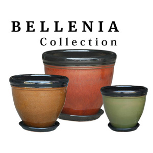 Bellenia Collection