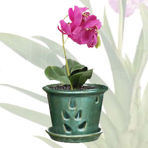 Orchid Pot Collection